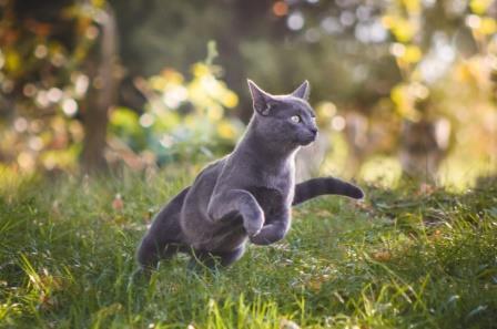BARF Katzen
