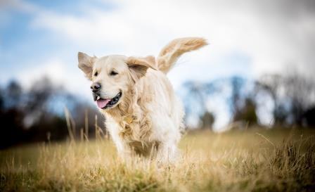 BARF Hunde